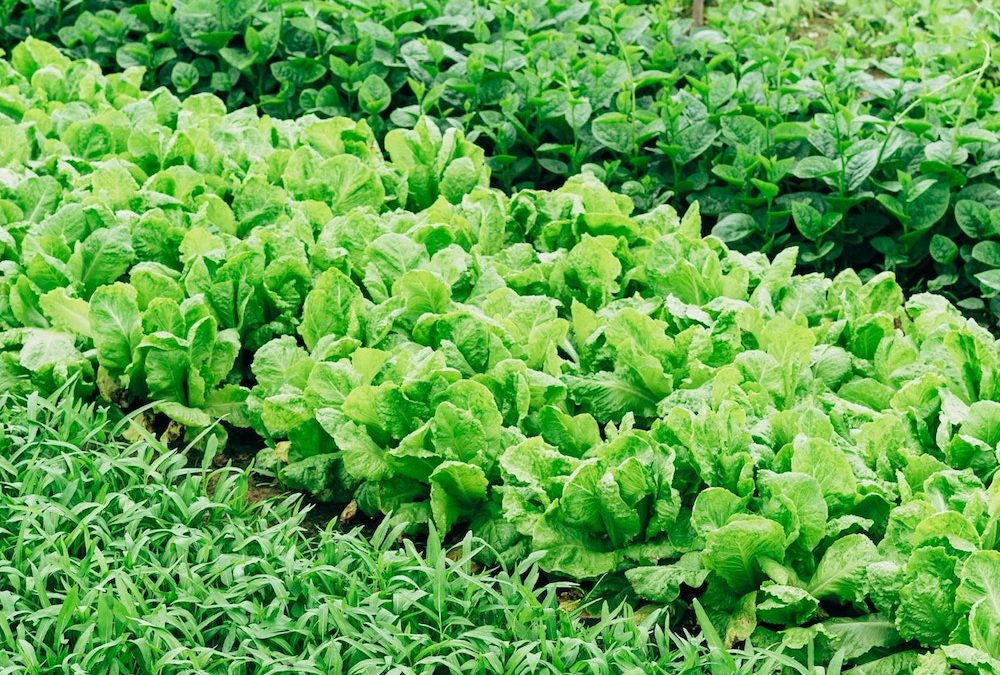 Organic Agriculture in PEI